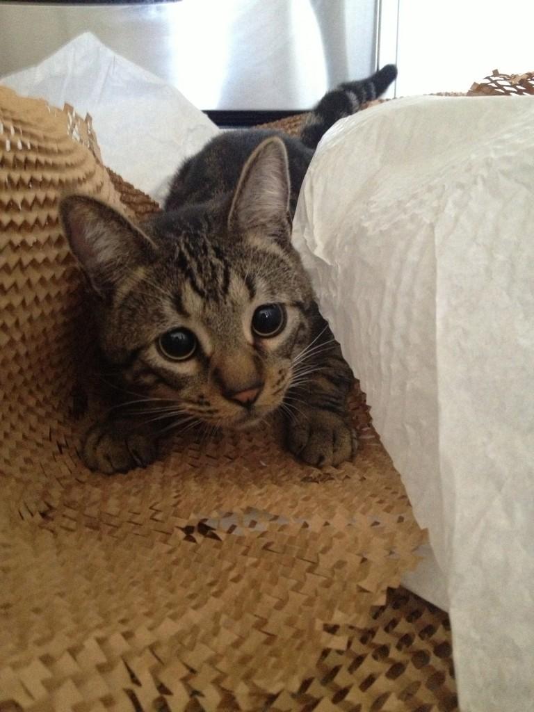 Rupert loves Crate & Barrel